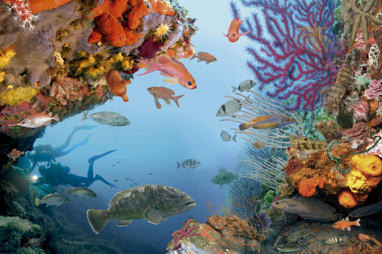 Coraligen poster